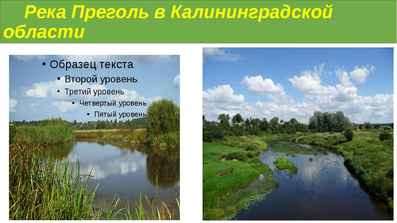 Река Преголь в Калининградской области