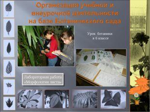 Лабораторная работа «Морфология листа» Подробно Урок ботаники в 6 классе Еще ?