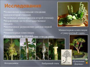 Размножение воздушными отводками (диплом второй степени) Кукольные деревца (д