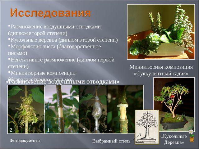 Размножение воздушными отводками (диплом второй степени) Кукольные деревца (д...