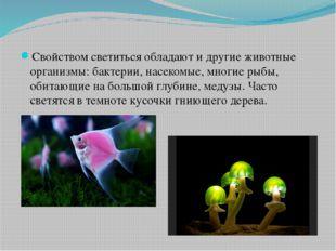 Свойством светиться обладают и другие животные организмы: бактерии, насекомы