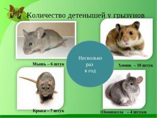 Количество детенышей у грызунов Мышь – 6 штук Крыса – 7 штук Хомяк – 10 штук