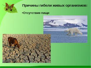 Причины гибели живых организмов: Отсутствие пищи
