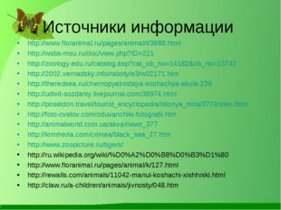 Источники информации http://www.floranimal.ru/pages/animal/t/3688.html http:/