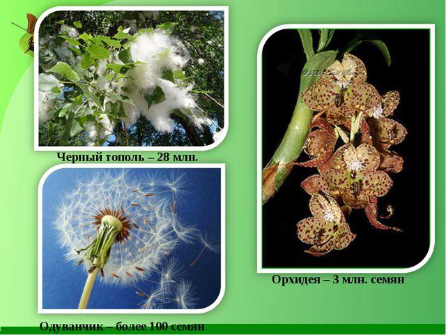Черный тополь – 28 млн. млн. штук в год Орхидея – 3 млн. семян Одуванчик – бо...