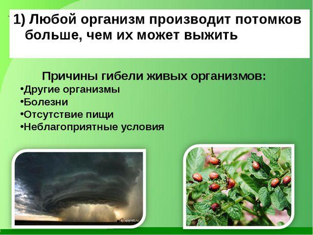 1) Любой организм производит потомков больше, чем их может выжить Причины гиб...