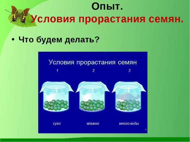Опыт. Условия прорастания семян. Что будем делать?