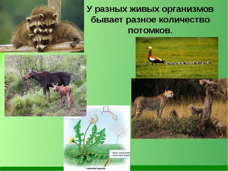 У разных живых организмов бывает разное количество потомков.