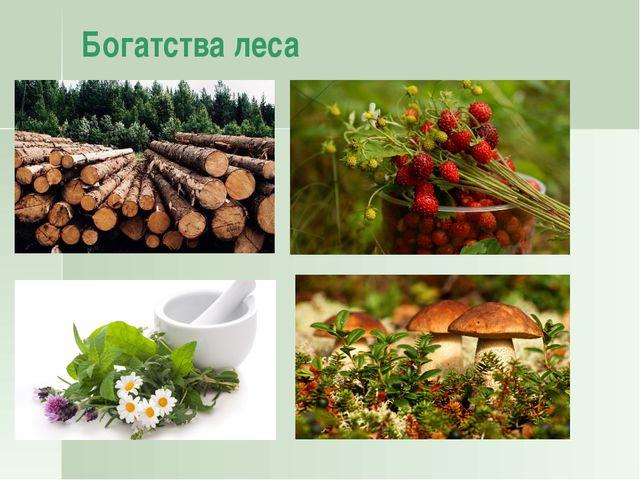 Охраняемые территории: заповедники и национальные парки Заповедники – особо о...