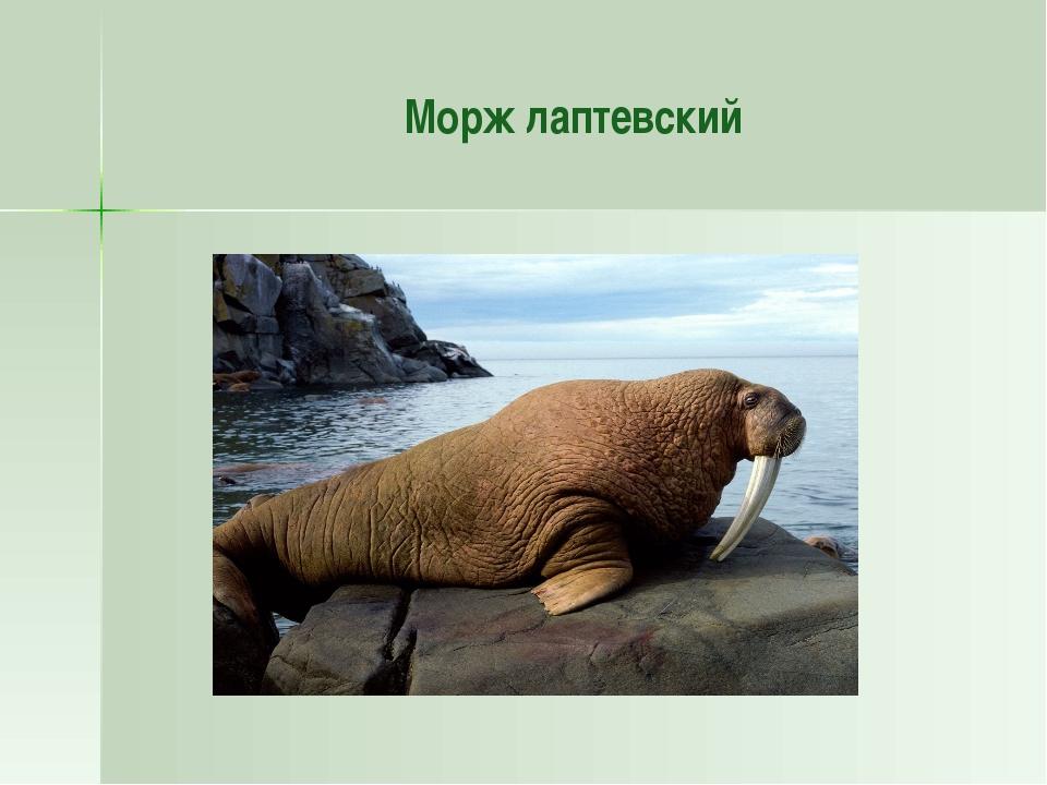 Домашнее задание § 37 Заполните таблицу. Растительный мир Животный мир Челове...