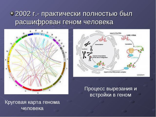 2002 г.- практически полностью был расшифрован геном человека Круговая карта...