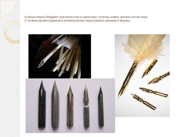 Гусиные перья обладают эластичностью и мягкостью, поэтому можно срезать кончи...
