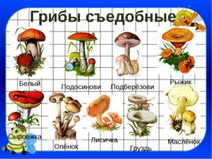 Грибы съедобные Белый гриб Подосиновик Рыжик Подберёзовик Сыроежка Опёнок Лис