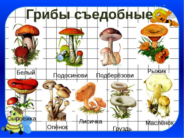 Грибы съедобные Белый гриб Подосиновик Рыжик Подберёзовик Сыроежка Опёнок Лис...