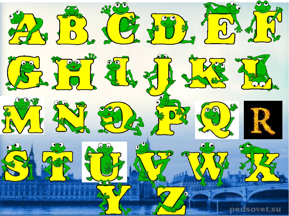 Animals What wild cats can you see on these pictures? A tiger A lion A lynx...
