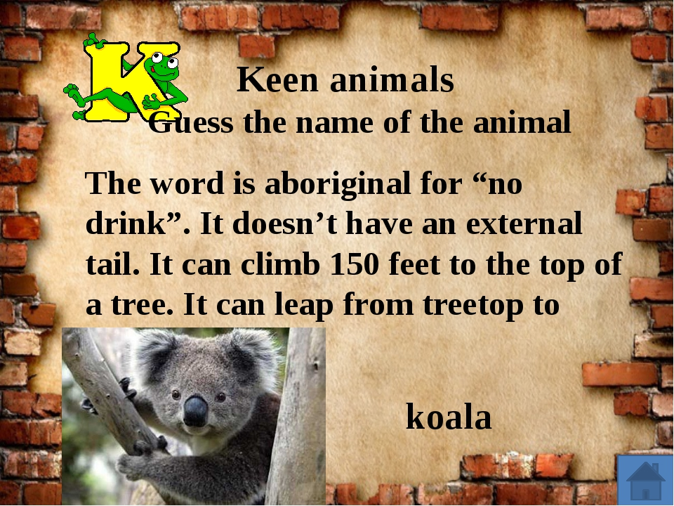 "Keen animals Guess the name of the animal The word is aboriginal for ""no dri..."