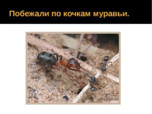 Побежали по кочкам муравьи.