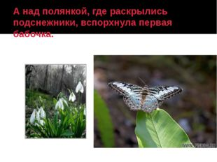 А над полянкой, где раскрылись подснежники, вспорхнула первая бабочка.