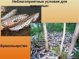 Неблагоприятные условия для животных: Браконьерство