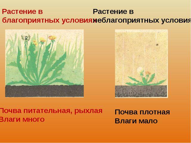 Растение в благоприятных условиях Растение в неблагоприятных условиях Почва п...