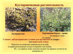 Кустарничковая растительность Главное неблагоприятное условие для организмов