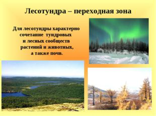 Лесотундра – переходная зона Для лесотундры характерно сочетание тундровых и