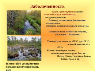 Заболоченность Температура летом от +10°С. до +20 °С, а зимой доходит до – 45