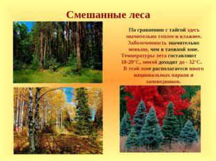 Смешанные леса По сравнению с тайгой здесь значительно теплее и влажнее. Забо