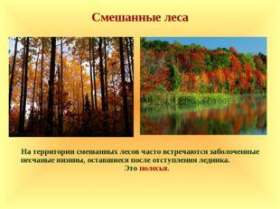 Смешанные леса На территории смешанных лесов часто встречаются заболоченные п