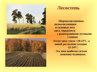 Лесостепь Широколиственные, мелколиственные и сосновые леса здесь чередуются