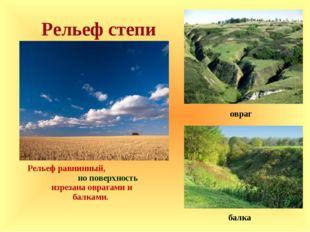 Рельеф степи Рельеф равнинный, но поверхность изрезана оврагами и балками. б
