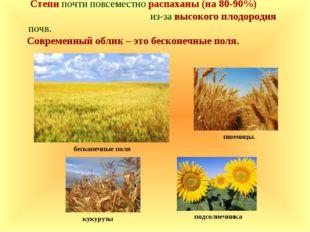 Степи почти повсеместно распаханы (на 80-90%) из-за высокого плодородия почв