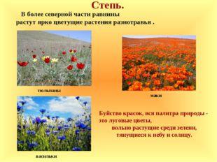 Степь. маки В более северной части равнины растут ярко цветущие растения разн