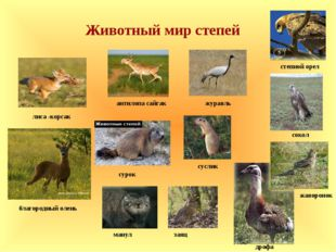 антилопа сайгак лиса -корсак манул журавль дрофа жаворонок заяц благородный