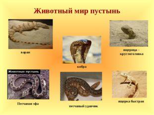 Животный мир пустынь ящерка быстрая песчаный удавчик кобра варан ящерица – кр