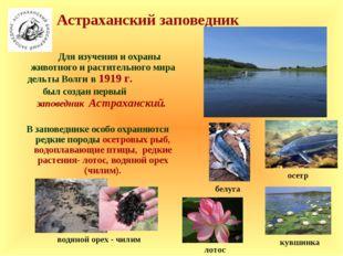 Для изучения и охраны животного и растительного мира дельты Волги в 1919 г.