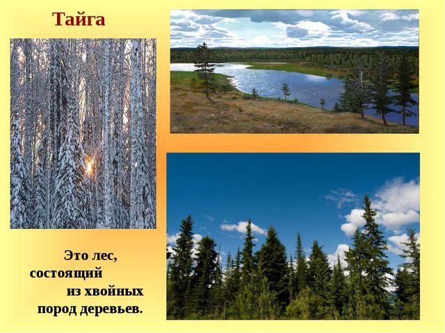 Тайга Это лес, состоящий из хвойных пород деревьев.
