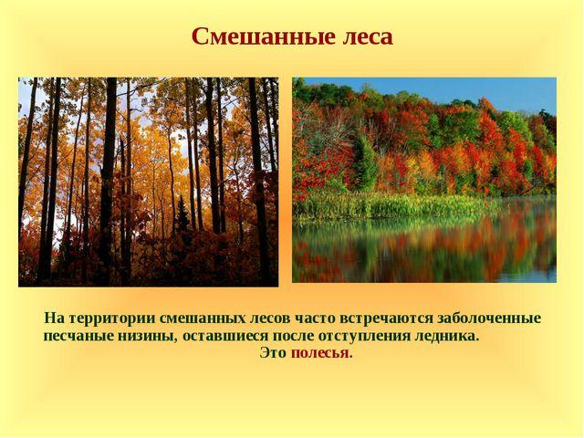 Смешанные леса На территории смешанных лесов часто встречаются заболоченные п...