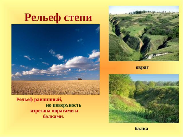 Рельеф степи Рельеф равнинный, но поверхность изрезана оврагами и балками. б...