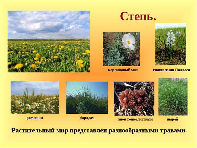 Степь. Растительный мир представлен разнообразными травами. карликовый мак п...