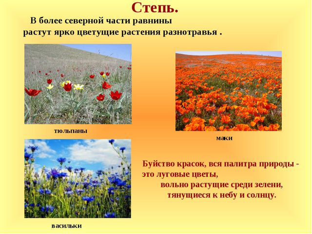 Степь. маки В более северной части равнины растут ярко цветущие растения разн...