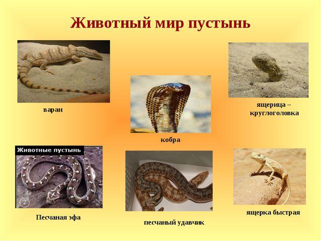 Животный мир пустынь ящерка быстрая песчаный удавчик кобра варан ящерица – кр...