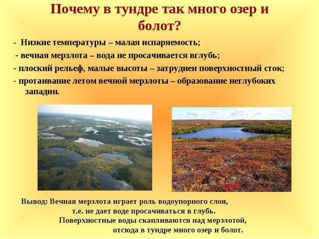 Почему в тундре так много озер и болот? - Низкие температуры – малая испаряем...