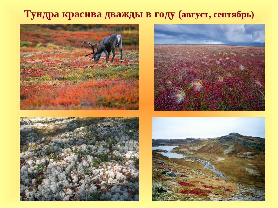 Тундра красива дважды в году (август, сентябрь)