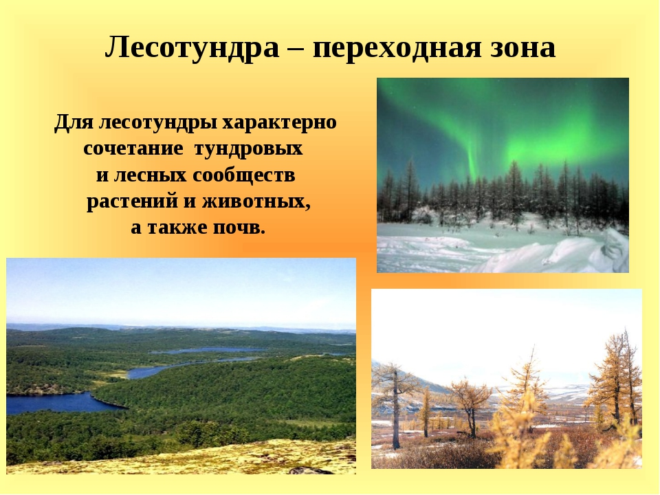 Лесотундра – переходная зона Для лесотундры характерно сочетание тундровых и...