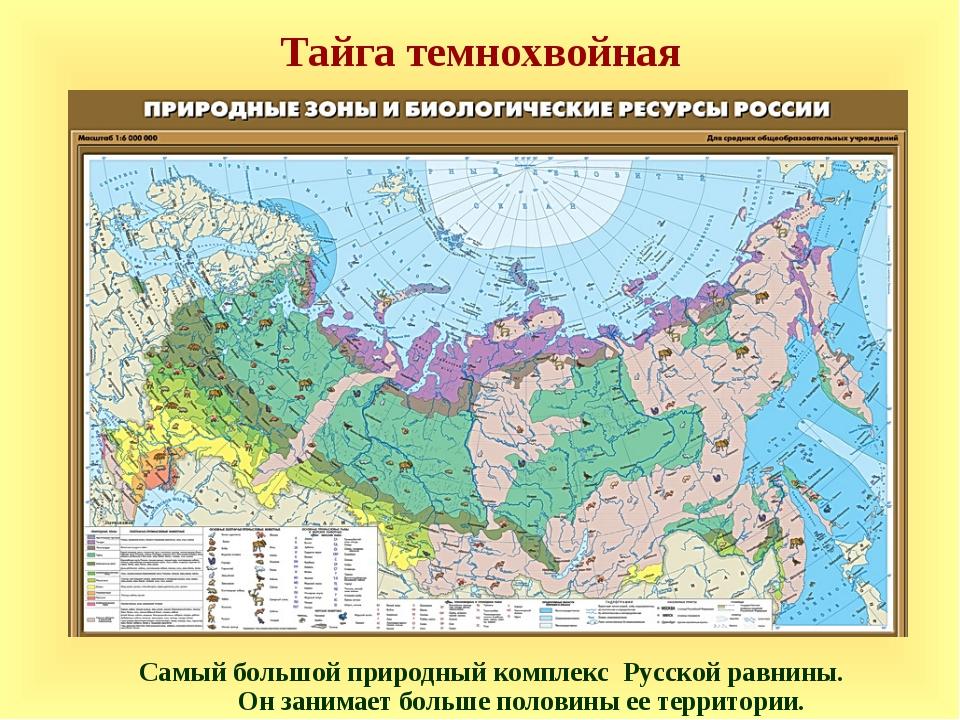 Тайга темнохвойная Самый большой природный комплекс Русской равнины. Он заним...