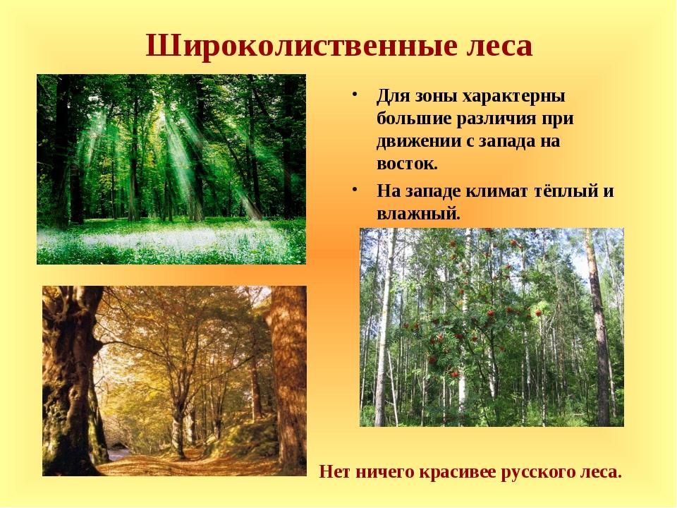 Широколиственные леса Для зоны характерны большие различия при движении с зап...