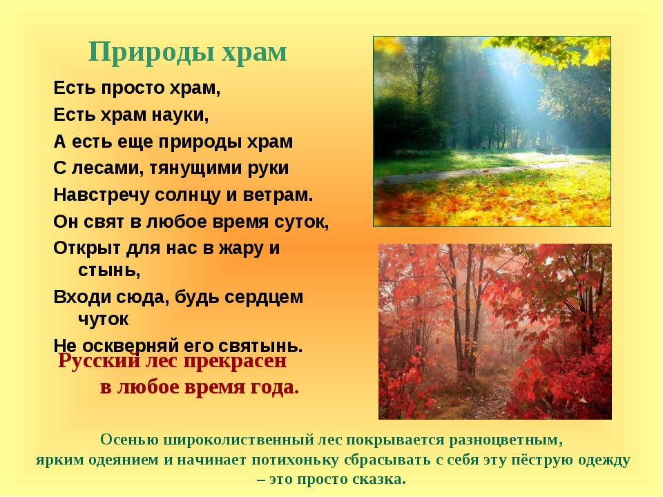 Природы храм Осенью широколиственный лес покрывается разноцветным, ярким одея...