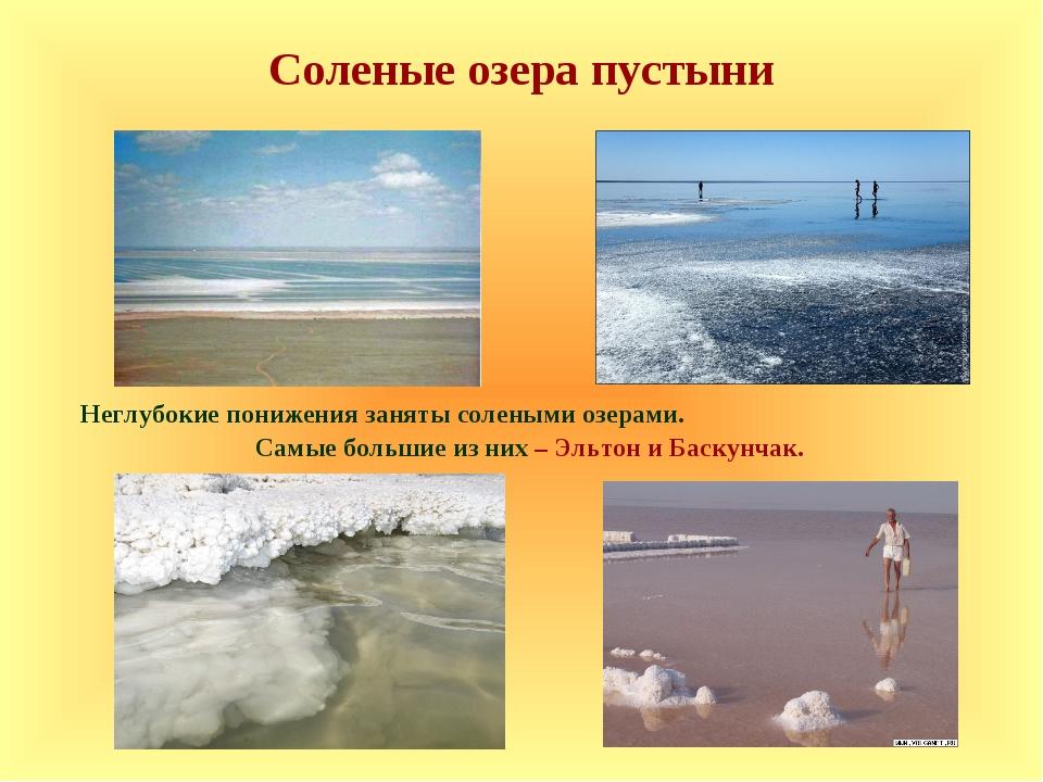 Неглубокие понижения заняты солеными озерами. Самые большие из них – Эльтон...