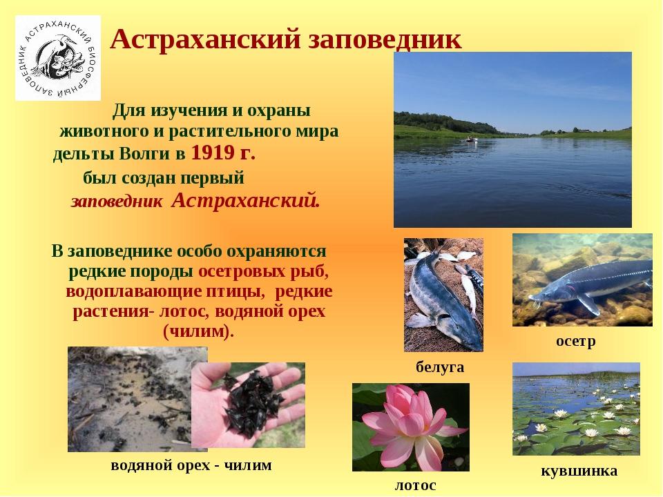 Для изучения и охраны животного и растительного мира дельты Волги в 1919 г....